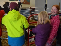There were eight stations for students to explore, including one which featured a cow and her newborn calf, with the opportunity to learn about cow nutrition. (Clare Bonnyman/CBC)