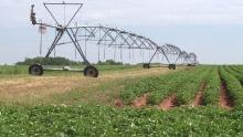webster-farms